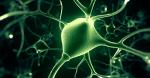 mity_na_temat_mozgu